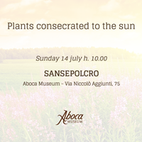 Plants consecrated to the sun