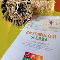 Entomologi in erba
